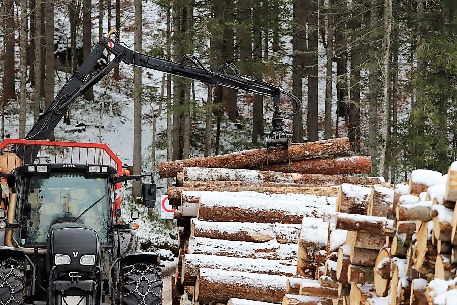 """Holz aus Bayern"" (Foto: Knut Kuckel)"